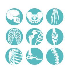 human anatomy orthopedic vector image vector image