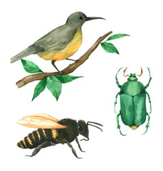Animal bird bee and bug hand paint in watercolour vector
