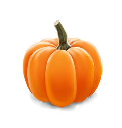 realistic pumpkin isolated on white vector image