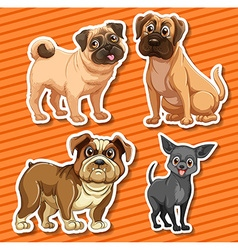 Small breeds dogs on orange background vector image