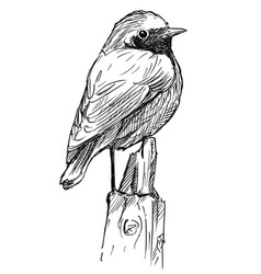 hand drawing of small bird common redstart vector image