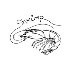 hand drawn shrimp with lettering isolated vector image