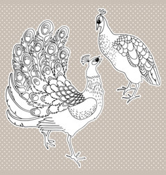 two isolated exotic peacock birds vector image