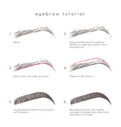 Eyebrow tutorial vector