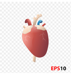 Heart human internal organ realistic isolated vector