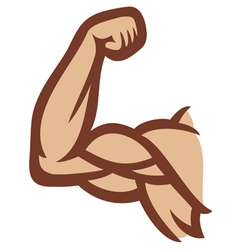 biceps - arm showing muscles vector image vector image
