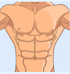 Bodybuilder anatomy of the abdominal muscles man vector