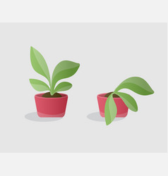 green and wilted plants vector image