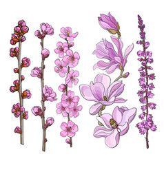 Hand drawn pink flowers - magnolia apple and vector