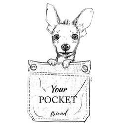 Little dog in pocket vector