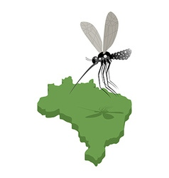 Mosquito and map of Brazil Zika virus in Brazil vector image
