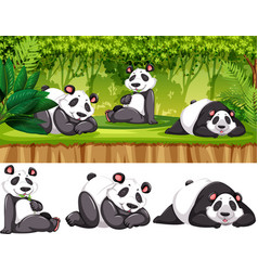 panda in the wild vector image