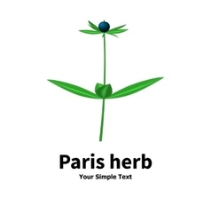 Plant with poisonous berries Paris herb vector image