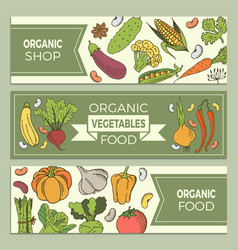 poster with vegetables vector image