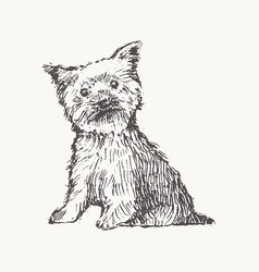 yorkshire terrier draw dog realistic sketch vector image