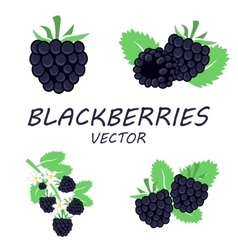 flat blackberries icons set vector image