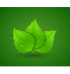 Green leaves with drops of water vector image