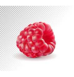 Ripe raspberries isolated on transparent vector