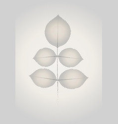 rose leaves on transparent paper vector image