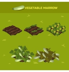 SET 3 Isometric Stage of growth Vegetable marrow vector