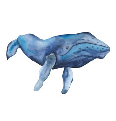 watercolor blue whale clipart vector image