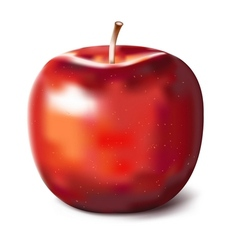 Hand painted red apple vector image