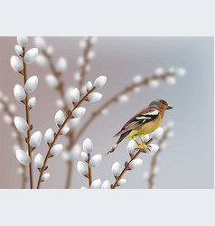 beautiful sparrow and willow branches vector image
