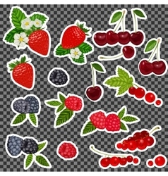 Strawberry Blueberry Cherry Raspberry Red vector