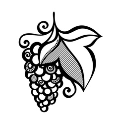 Beautiful Branch of Grapes vector image