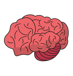 brain idea human organ vector image