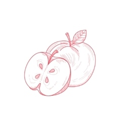 Fresh Apple Hand Drawn Artistic Sketch vector image vector image