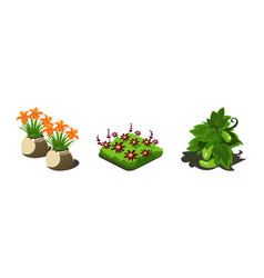 garden plants flowers and vegetables game user vector image