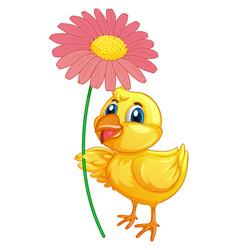Little duckling holding flower on white background vector