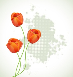 red tulips vector image
