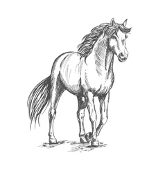 White horse standing with lifted hoof vector image vector image