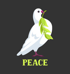 White dove of peace bears olive branch vector