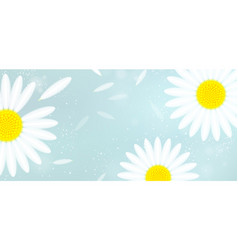 Banner with white camomiles and falling petals vector