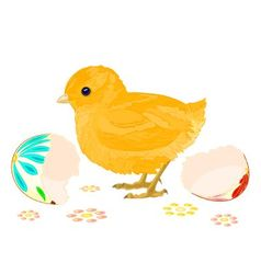 Easter chick hatched from eggs vector