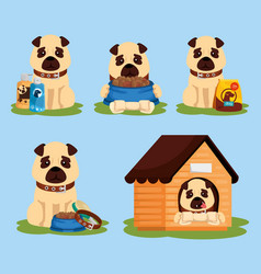 group dogs with icons vector image