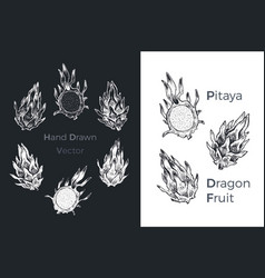 hand drawn dragon fruit or pitaya icons vector image