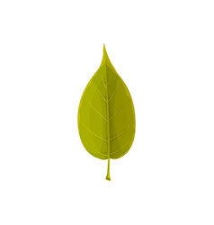 leaf green tree autumn and fall foliage icon vector image