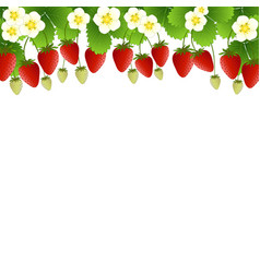 Red strawberry and flower frame on white vector