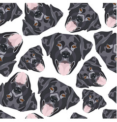 seamless pattern black labrador vector image