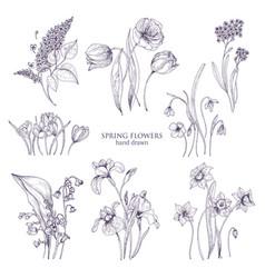Set gorgeous botanical drawings spring vector