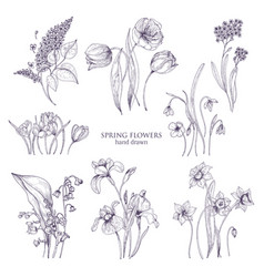 Set of gorgeous botanical drawings of spring vector