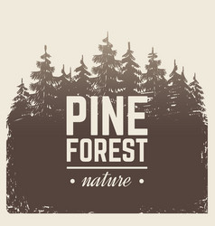 Sketch vintage nature pine and fir tree forest in vector