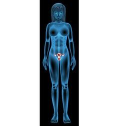 Reproductive organ of a woman vector image