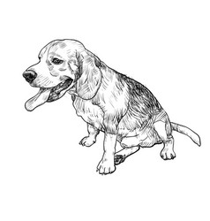 drawing of adorable male beagle sitting and vector image