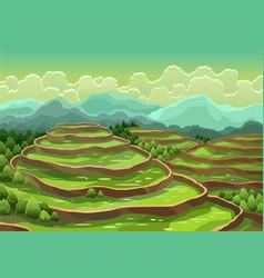 landscape rice field terraces asian rural vector image