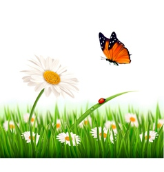 Nature summer daisy flower with butterfly vector